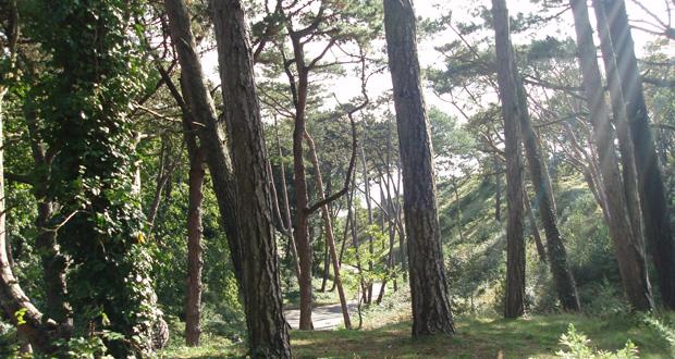 Boscombe-Chine-Gardens-2