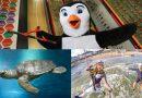 RockReef Oceanarium Collage